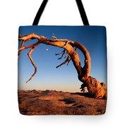 Twilight View Of A Jeffrey Pine Tree Tote Bag