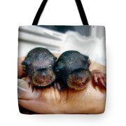 Twin Baby Squirrels Tote Bag