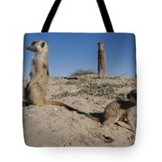 Two Adult Meerkats Suricata Suricatta Tote Bag