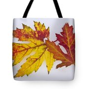 Two Autumn Maple Leaves  Tote Bag