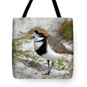 Two-banded Plover Charadrius Tote Bag