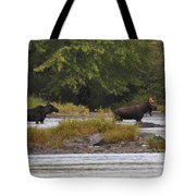 Two Bull Moose In Maine Tote Bag