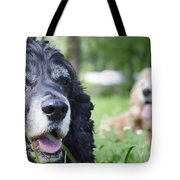Two Cocker Spaniel Dogs Tote Bag