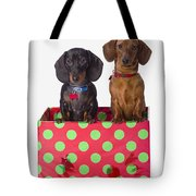 Two Dachshund Puppies Inside A Polka Tote Bag