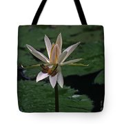 Two Frogs Sharing A Lotus Tote Bag