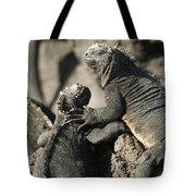 Two Marine Iguanas Amblyrhynchus Tote Bag