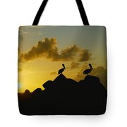 Two Pelicans Perched On Rocks Tote Bag