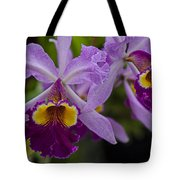 Two Pink Purple Orchids Tote Bag