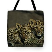 Two Sleepy Four-month-old Leopard Cubs Tote Bag