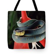 Two-striped Forest Pit Viper Bothrops Tote Bag
