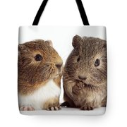 Two Young Guinea Pigs Tote Bag