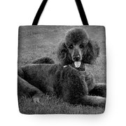 Tyler In Black And White Tote Bag