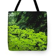 Umbrella Of Trees In Forest Tote Bag