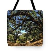Under The Oak Canopy Tote Bag