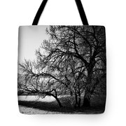Under The Waiting Tree Tote Bag