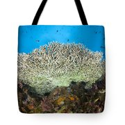 Underside Of A Table Coral, Papua New Tote Bag by Steve Jones