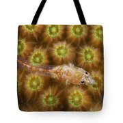 Unknown Gobie Blenny Found At 48 Feet Tote Bag