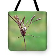 Unrealized Beauty Tote Bag