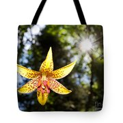 Up And Under There Was Beauty Tote Bag