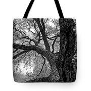 Up Tree Tote Bag