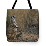 Using Its Tail, An Adult Meerkat Tote Bag