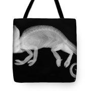 Veiled Chameleon X-ray Tote Bag by Ted Kinsman