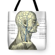 Veins Of The Head And Neck Tote Bag
