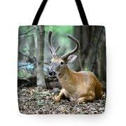 Velvet Buck At Rest  Tote Bag