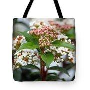 Viburnum Tinus Spring Bouquet Tote Bag