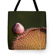 Victoria Amazonica Bud And Leaf Tote Bag