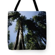 View Looking Up The Trunks Of Giant Tote Bag