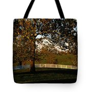 View Of A Large Sycamore Tree And White Tote Bag
