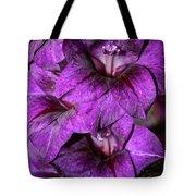 Violet Glads Tote Bag