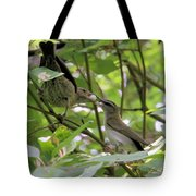 Vireo And Cowbird Tote Bag