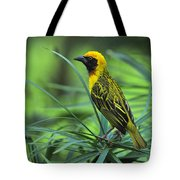 Vitelline Masked Weaver Tote Bag