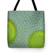 Volvox Globator Surface View Of Colony Tote Bag