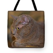 Warm Kitty  Tote Bag