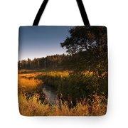 Warm Morning Sun. The Trossachs National Park. Scotland Tote Bag