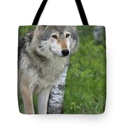 Watchful Eyes Tote Bag