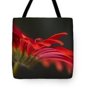 Water Drop On A Red Gerbera Flower Tote Bag