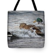 Water Is A Bit Cold Tote Bag