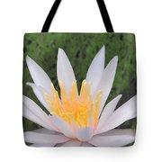 water lily 85 Arc-en-ciel Tote Bag