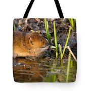 Water Vole At Dusk Tote Bag