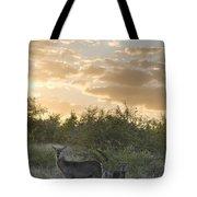 Waterbuck Kobus Ellipsiprymnus Mother Tote Bag