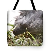Waterhen Coot On Nest With Eggs Tote Bag