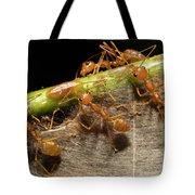 Weaver Ant Oecophylla Longinoda Group Tote Bag