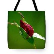 Weeping Rose Bud Tote Bag