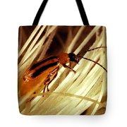 Western Corn Rootworm Beetle Tote Bag