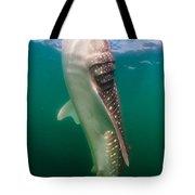 Whale Shark, La Paz, Mexico Tote Bag