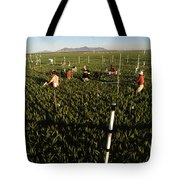 Wheat And Elevated Carbon Dioxide Tote Bag by Science Source
